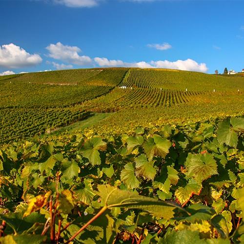 Met wijnproefclub op wijnreis naar de Elzas