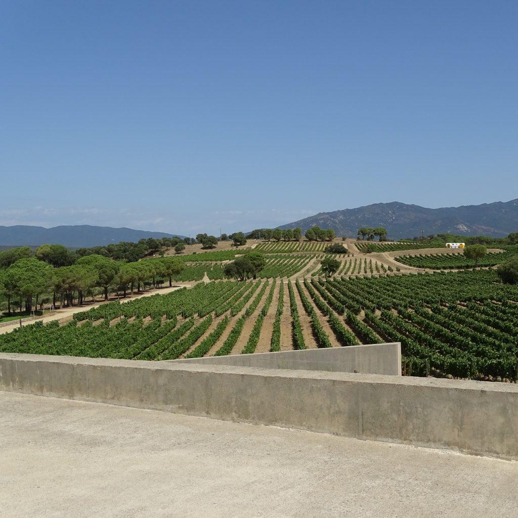 Wijngaarden Terra Remota